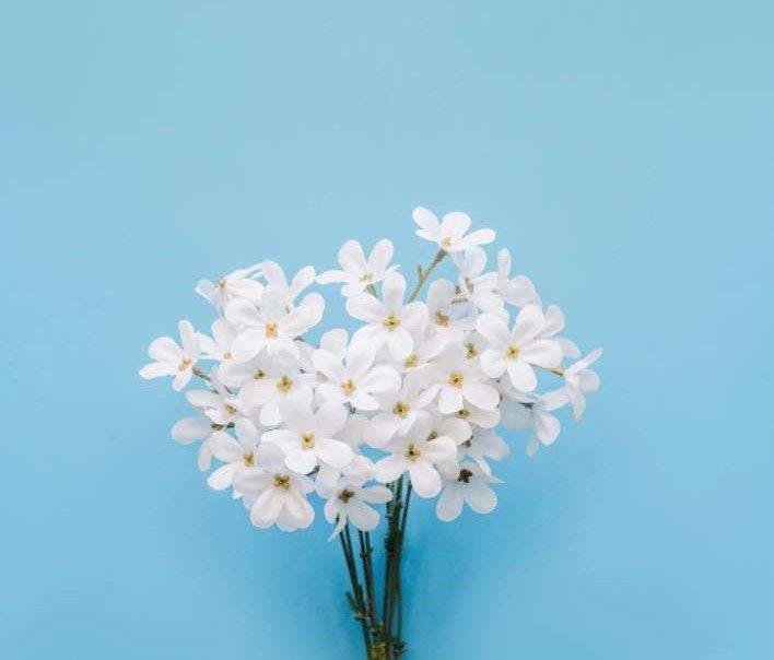 Une photo qui illustre un bouquet de fleurs de jasmin sur un fond bleu.