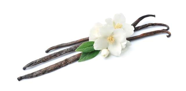 Une photo qui illustre trois fleurs de vanille posées sur trois gousses de vanille sur un fond blanc.