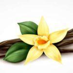 La vanille en parfumerie, une matière première de qualité.