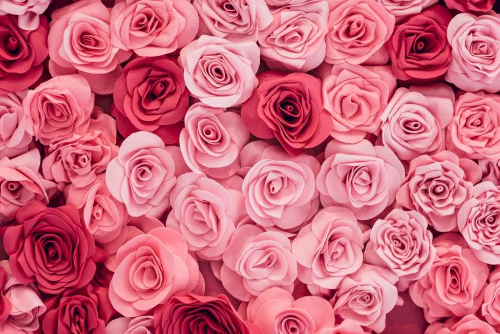 Une photo illustrant une dizaine de fleurs de rose chacune à coté de l'autre.